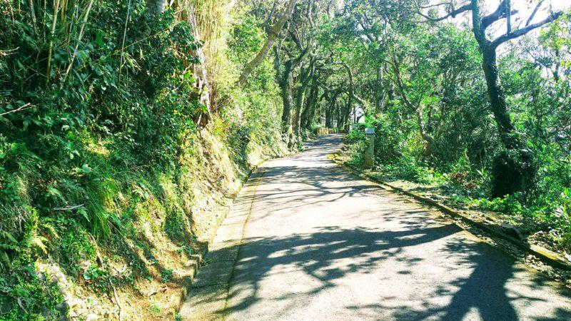 最御崎寺の仁王門へ続く坂道