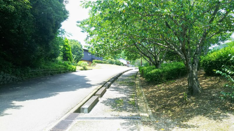参道は途中から史跡公園の車道に合流する