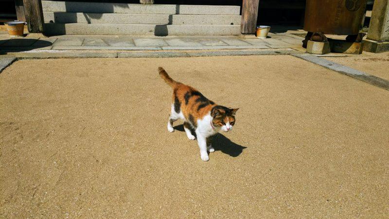 神社にいる三毛猫