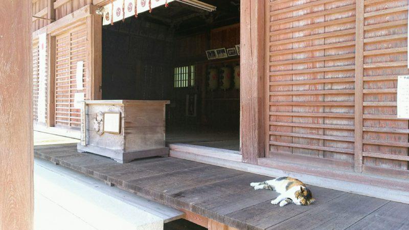 猫がいる拝殿